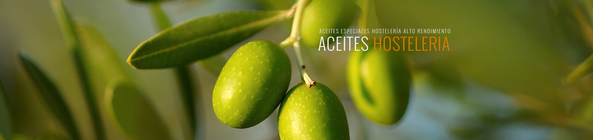 aceites-especiales-hosteleria1