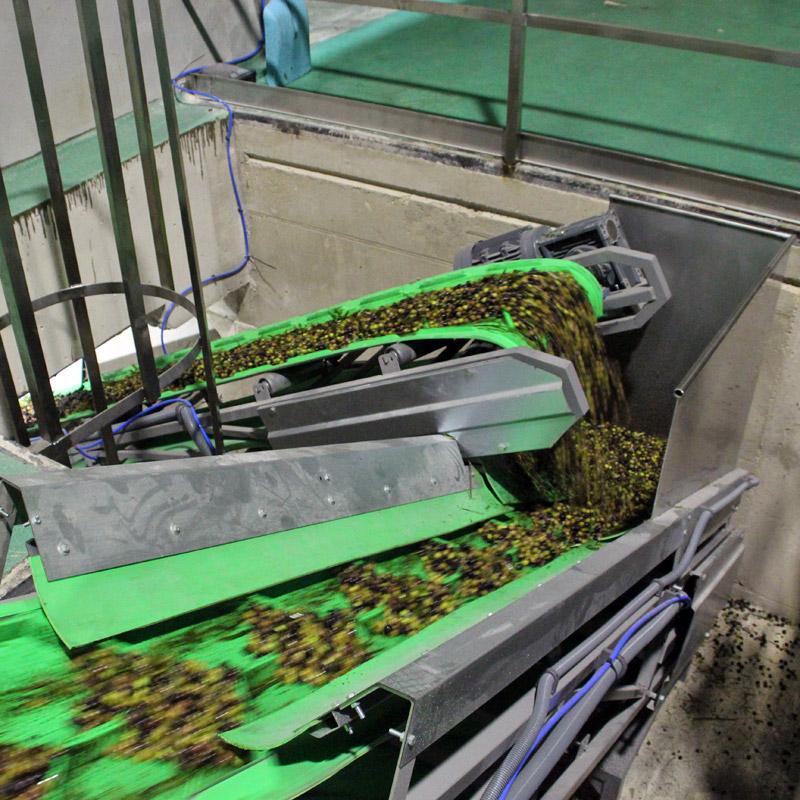 Procesando la oliva